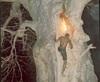 Vign_recolte_Baobab