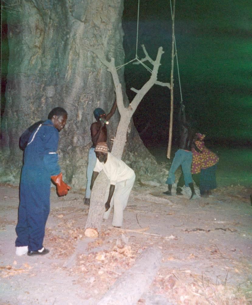 recolte_Baobab_0